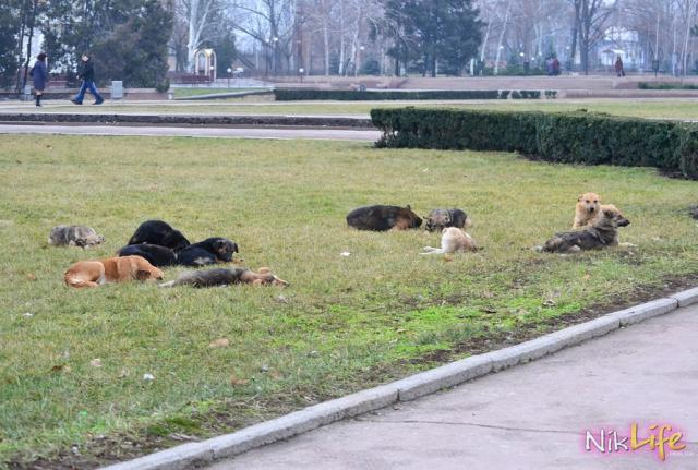 Стаи бродячих собак оккупировали Николаев