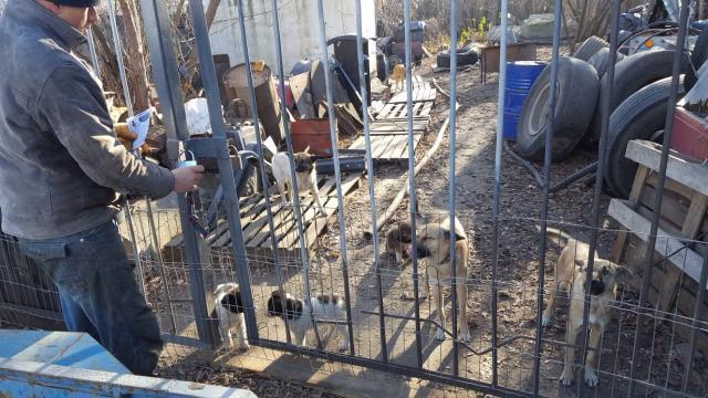 Руководитель АТП построил вольер для бродячих собак, обитающих на территории предприятия