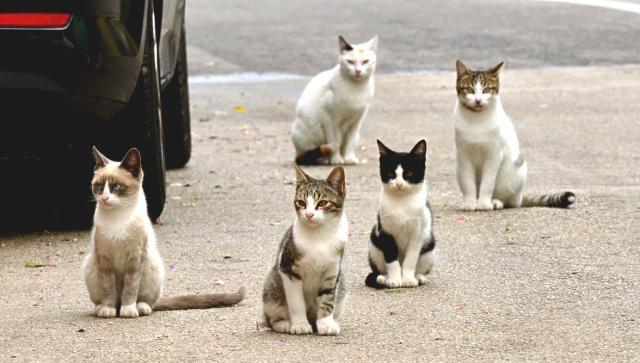 В Харькове начали массово травить кошек
