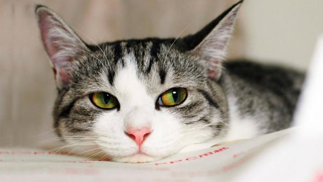 О пользе кастрации или как изменить судьбу кота