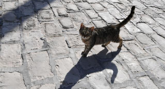 Девушку парализовало после того, как она погладила бездомную кошку