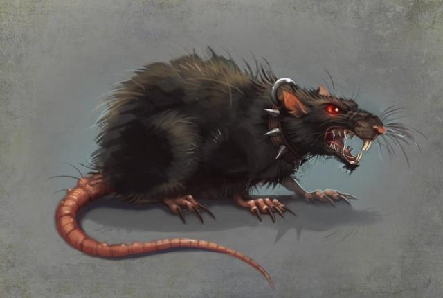 В Киеве бешеная крыса покусала зоозащитницу