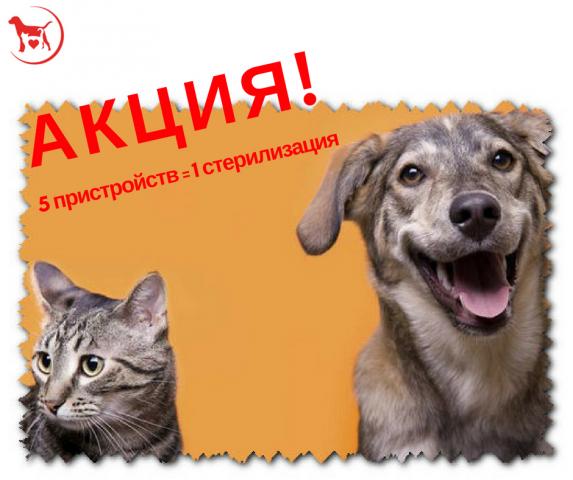 """КП """"Центр обращения с животными"""" совместно с волонтерами продолжает акцию """"5 пристройств = 1 стерилизация"""""""