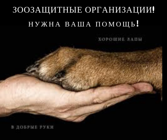 Обращение к зоозащитным организациям! Решением суда прекращена деятельность незаконного приюта для собак