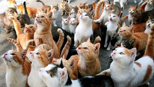 Харьковским городским советом выделены средства на ОСВ бездомных кошек