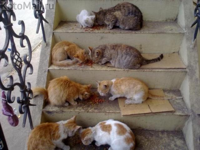 Синдром Плюшкина в действии, или Как справиться со стихийными приютами для животных?
