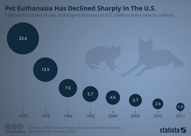 В США резко снизилось количество эвтаназий домашних животных