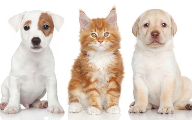 В Великобритании зоомагазинам запретили продавать щенков и котят
