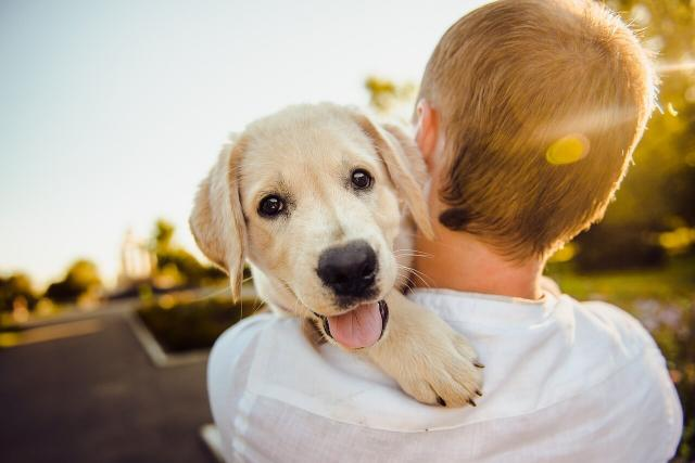 В 2018 году в Харькове новый дом обрели 533 бездомных животных