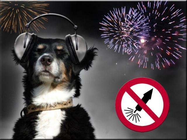 """КП """"Центр обращения с животными"""" - вниманию владельцам собак!"""