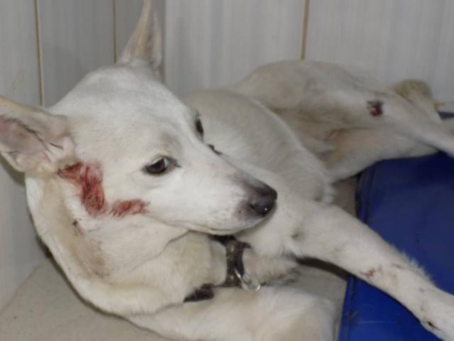 Собаки - жертвы ДТП