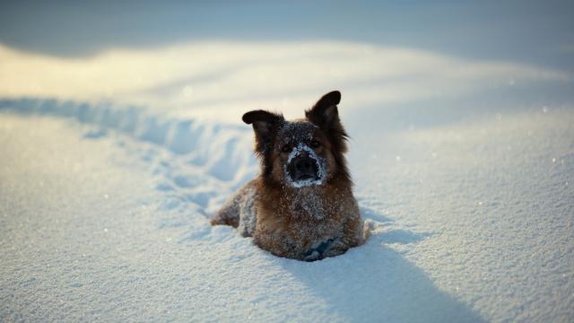 Особенности выгула собак зимой