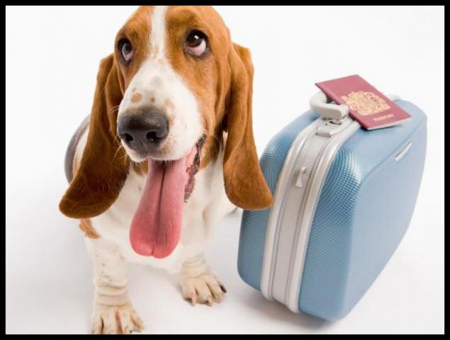 Держпродспоживслужба щодо некомерційного переміщення домашніх тварин на територію ЄС