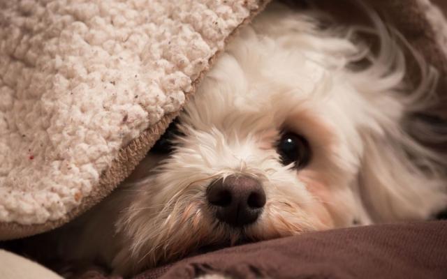 Харьковский центр содержания бездомных животных просит оказать помощь в утеплении будок