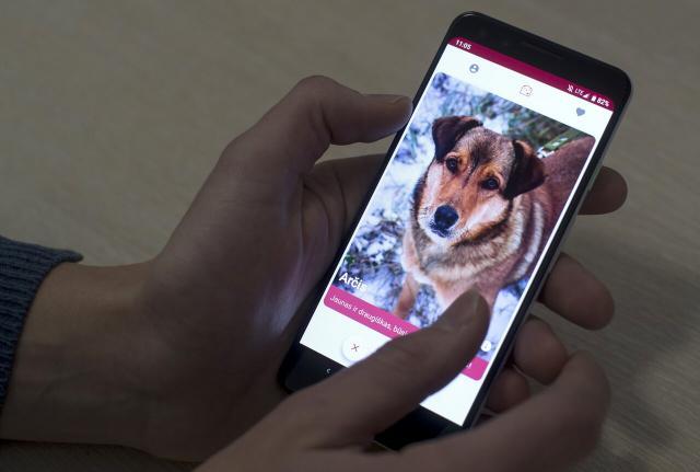 В Литве появился Tinder для знакомства с собаками. Все свидания — в приютах