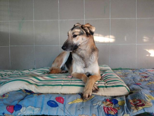 """КП """"Центр обращения с животными"""" благодарит харьковчан, оказавшим помощь в утеплении будок для собак приюта!"""