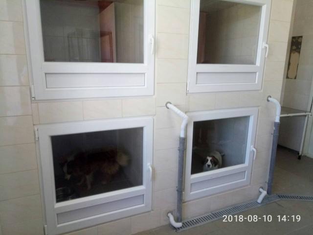 """В КП """"Центр обращения с животными"""" в зоне карантина оборудовали боксы для содержания щенков и короткошерстных собак"""