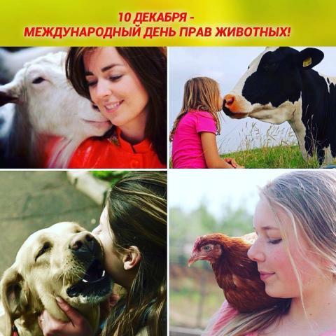 10 декабря отмечают Международный день прав животных
