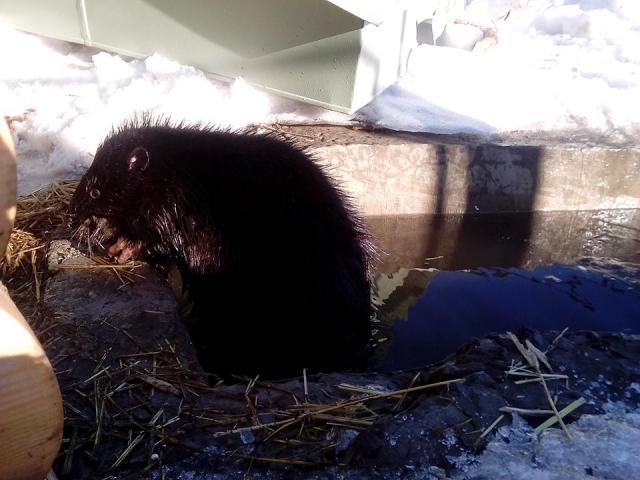О необычных питомцах харьковского Центра содержания животных