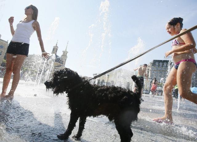 жара для животных
