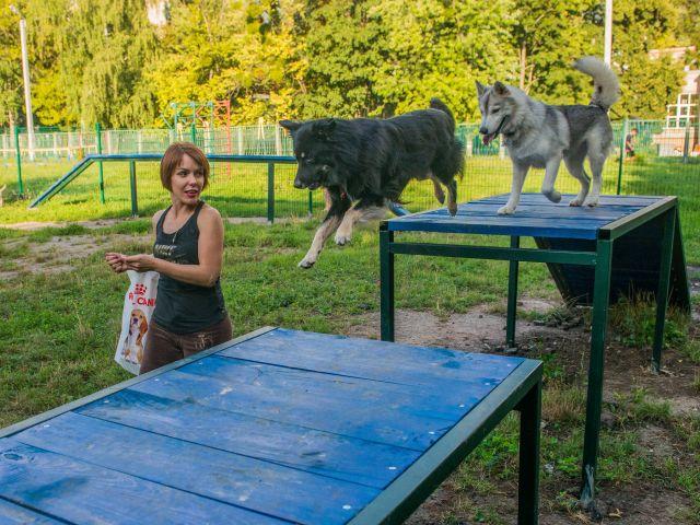 На вулиці Дерев'янка відкрили майданчик для вигулу собак