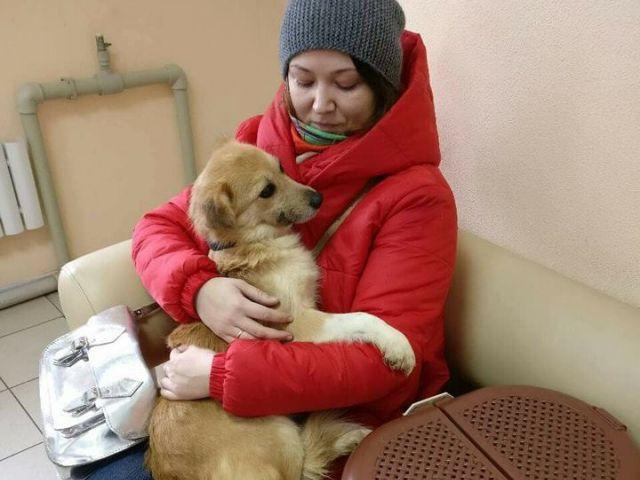 Пристроенные животные в приюте Центра обращения с животными Харьков