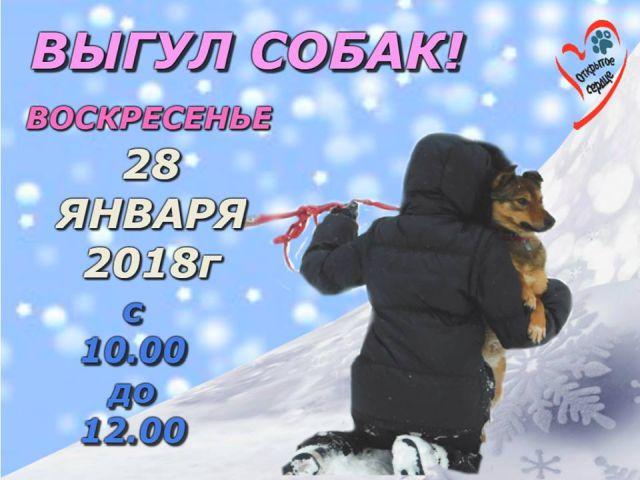 """Выгул собак и посещение """"Кошкин Дом"""" 28 января 2018 г."""