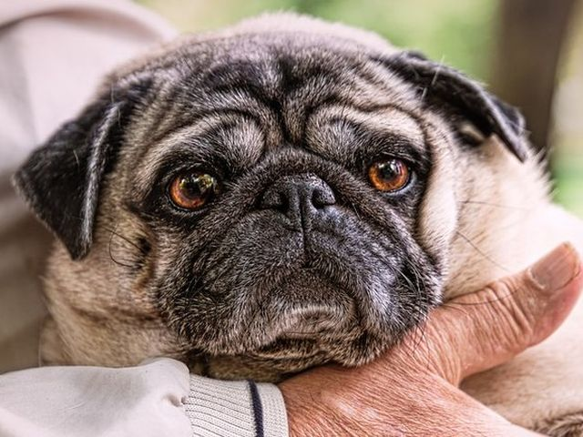 Ученые нашли неожиданное свойство, объединяющее людей и собак