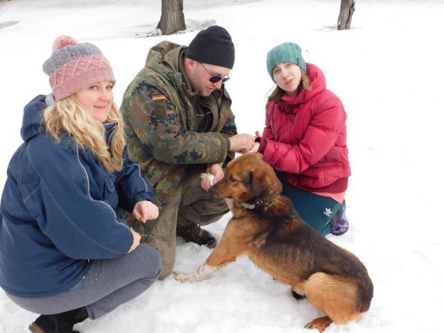В Центре обращения с животными воскресный выгул питомцев состоится при любой погоде.