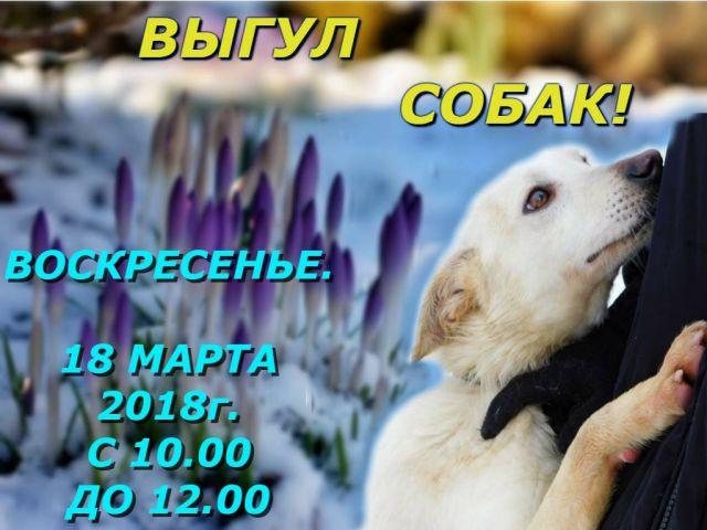 18 марта, в воскресенье в Центре обращения с животными выгул собак