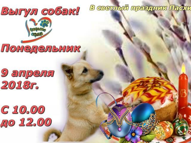 Центр обращения с животными приглашает харьковчан на экскурсию в приют 9 апреля