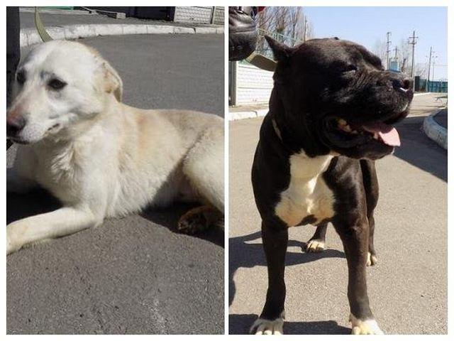 Собаки-неразлучники Квентин и Маркус снова вместе