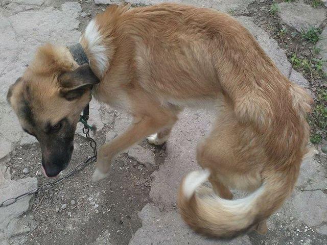 На Запорожье семья до смерти морит голодом домашних собак