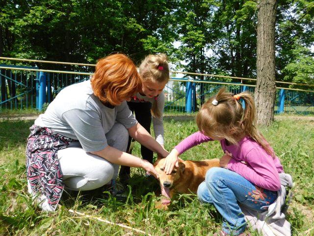 2 июля — Международный день собак
