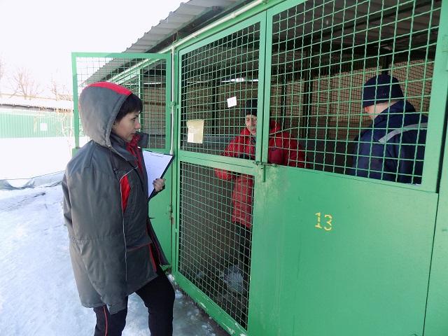 В приюте Центра обращения с животными около 120 собак ждут новых хозяев