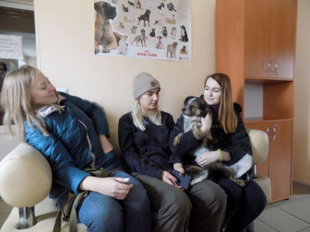 пристройство в приюте центра обращения с животными