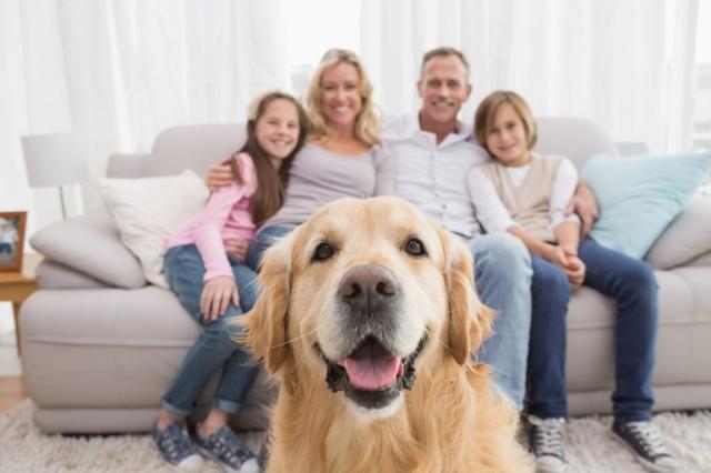 Собака - отражение семьи