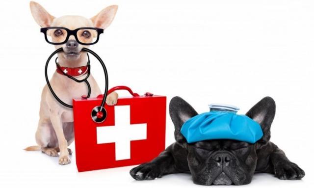"""Ветеринарная """"аптечка"""" для собак"""