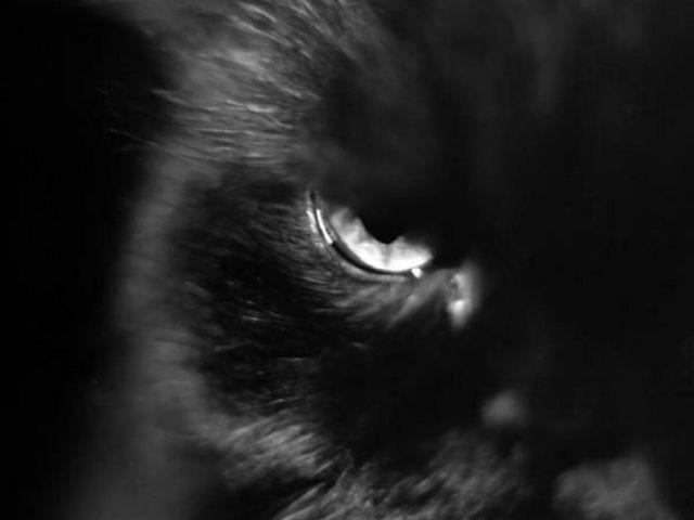 Под Харьковом бешеный кот покусал троих человек