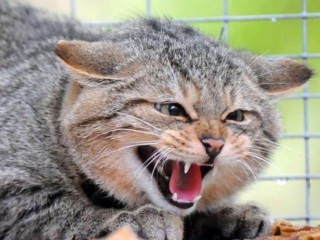 В одном из районов Харьковской области ввели карантин из-за бешенства кота