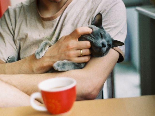 Акция по пристройству кошек из приюта от КП Центр обращения с животными Харьков