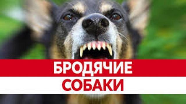 КП «Центр обращения с животными» - за 7 лет количество бездомных собак в Харькове уменьшилось на 70 %