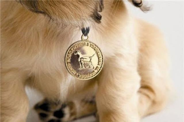 Владельцев домашних животных обяжут регистрировать своих питомцев