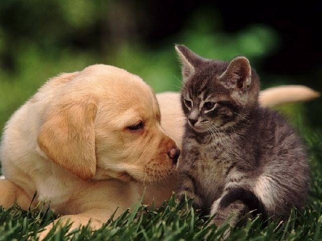 Вильнюсский горсовет в среду утвердил размер сбора за содержание кошек и собак в многоквартирных домах.