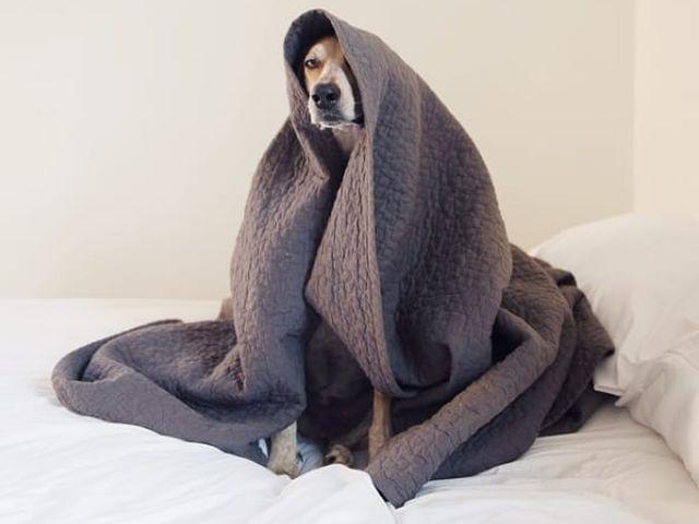 """Администрация КП """"Центр обращения с животными"""" просит приносить теплые вещи для утепления будок."""