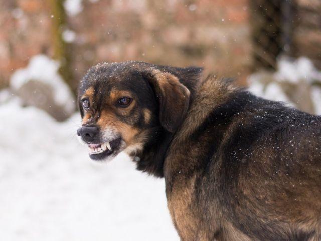 В РФ бродячие собаки насмерть загрызли жителя Подмосковья
