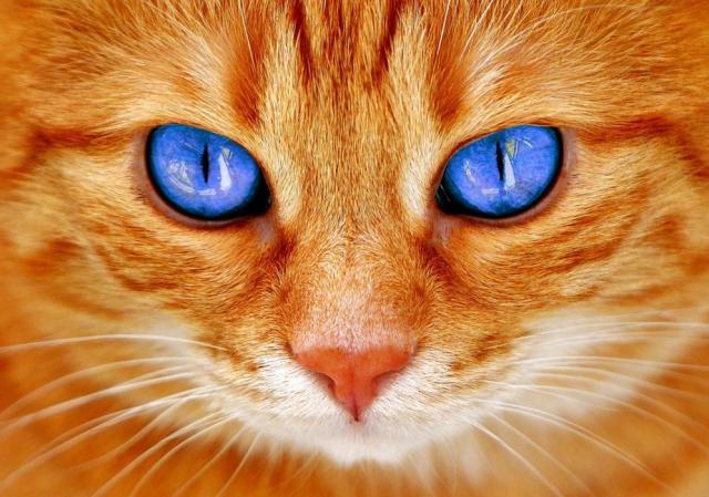Город в Бельгии запретил кормить котов без лицензии