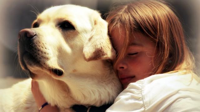 Подписание договора о партнерстве. Собаки-лекари станут посещать слабовидящих детей