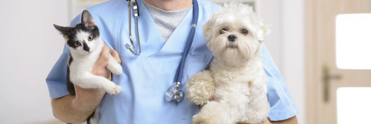 Ветеринарная помощь в Харькове