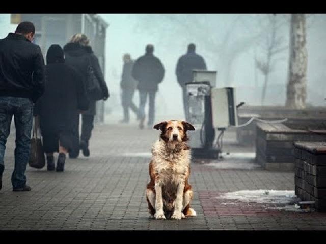 Миллионы псу под хвост